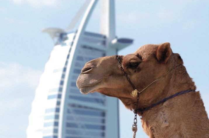 Dubai auf einer Kreuzfahrt entdecken