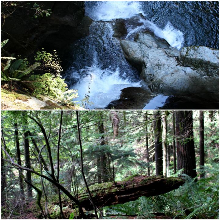 Vancouver - Lynn Canyon